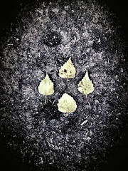 """Diamond Formation (CJS*64 """"Man with a camera"""") Tags: samsung mobile leaves autumn diamond formation dark fallen four 4"""
