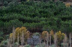 Nacimiento Rio Mundo JAL0028 (dedaimiel) Tags: riomundo naturaleza paisaje landscape nature jalriomundo