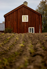 Jamtli, September 20, 2016 (Ulf Bodin) Tags: autumn jamtli sverige vertorama sweden outdoor grd september ker canonef100400mmf4556lisiiusm museum canoneos5dsr farm hst farming stersund field jmtlandsln se