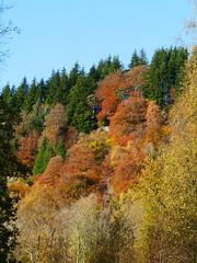 Callander Crags (Niall Corbet) Tags: scotland perthshire callandercrags callander autumn woodland forest