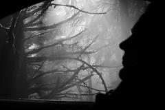 (sparth) Tags: 5dmkiv 5d sparth orca island orcaisland 2016 washington washingtonstate wa fog foggy brouillard blackwhite blackandwhite bw noirblanc noiretblanc nb
