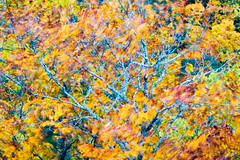Blowing In The Wind (Kevin Pihlaja) Tags: brockwaymountain copperharbor keweenaw upperpeninsula michigan oaktree foliage autumn fallcolors leaves nature abstract tree wind