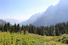 11745902_10206350562516715_2111614676338002844_n (changeyourscreennametopatrick) Tags: switzerland travel trekk hike passport mountains trees cows cheese waterfall wildflower meiringen oberland swiss wanderer