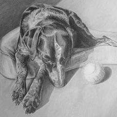 Luna (bellydanser) Tags: portrait drawing graphite petportrait dog animal pencil monochromatic blackwhite fineart pencildrawing art artwork