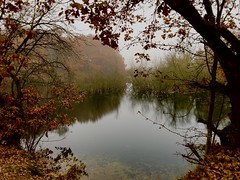 Through the trees (Andy Stones) Tags: mist autumn iphone iphoneography water pond imagecapture imageof trees nature image lincolnshire reflection nlincs fog exposure scunthorpe uk