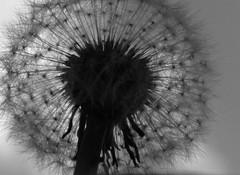 IMGP1887 (heather's higher purpose) Tags: nature inspire wish dream monochrome blackandwhite