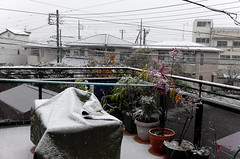 Day 329/366 : Snow in November (hidesax) Tags: 329366 snowinnovember home roof balcony snow november morning ageo saitama japan hidesax leica x vario 366project2016 366project 365project