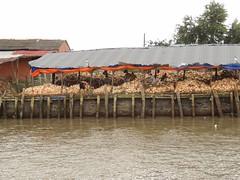 Coconut processing (program monkey) Tags: vietnam mekong river delta cargo boat ben tre tra vinh coconut processing factory work