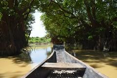 pathway to heaven? () Tags:    nikond5300 nikon   swampforest  ratargul sylhet bangladesh