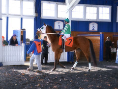 2016-12-02 (10)-1  r3 Yomar Ortiz on #7 Tigers Bop (JLeeFleenor) Tags: photos photography md maryland marylandracing marylandhorseracing laurelpark racing track racetrack jockey   jinete  dokej jocheu  jquei okej kilparatsastaja rennreiter fantino    jokey ngi horses thoroughbreds equine equestrian cheval cavalo cavallo cavall caballo pferd paard perd hevonen hest hestur cal kon konj beygir capall ceffyl cuddy yarraman faras alogo soos kuda uma pfeerd koin    hst     ko  paddock outside outdoors yomaroortiz