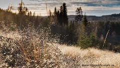 20161209099124 (koppomcolors) Tags: koppomcolors december sweden sverige scandinavia värmland varmland