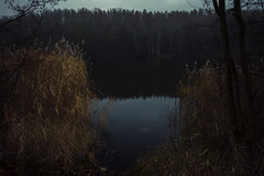 Fading Memories (Netsrak (on/off)) Tags: lake see untersee liblar wald forst forest woods reflections reflektionen schilf reed