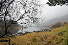 WILDERNESS AND RAINDROPS (DESPITE STRAIGHT LINES) Tags: life wood morning trees mountain lake man reflection tree nature water beauty rain fog wales forest photography aperture woods woodlands nikon flickr solitude alone dof hill foggy scenic tranquility calm depthoffield hills iso desire photograph serenity raindrops isolation gps needs snowdonia tranquil mothernature manfrotto secluded d800 shutterspeed northwales capelcurig nantgwryd paulwilliams llynmymbyr northwestwales snowdoniawales mirrorup llynaumymbyr nikon2470mm penygwrydhotel nikkor2470mmf28 dyffrynmymbyr nikond800 nikongp1 capelcuriglakes despitestraightlines nanygwrydwales ilobsterit