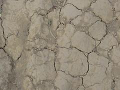 CIMG6411 (kazadmanesh) Tags: و بهار خشکسالی