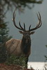 Quebec Elk & Red Stag Hunt 32