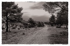# 7_ Souvenirs de vacances (Napafloma-Photographe) Tags: sky blackandwhite bw cloud france clouds landscape vacances pin noiretblanc ciel bandw nuage nuages paysage fr chemin garrigue 2014 virage pagnol carnouxenprovence paysagenoiretblanc