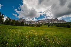 Di nuovo nel prato (Lerrysan) Tags: italy mountain flower field june italia montagna dolomites dolomiti rosengarten altoadige d800 catinaccio sudtirol 1424 eggental valdega lerrysan