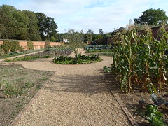 The early stage of the vegetable and soft fruit area (Holkham Estate) Tags: park door flowers wedding plants house heritage history nature fruit rural project garden layout coast countryside bed italian estate britain gates walk wildlife country norfolk victorian meadow olive warmth vegetable historic deer exotic greenhouse restoration organic ironwork patch renovation veg ornamental glasshouse development planting bedding trees relax statelyhome weathervane british holkhamhall grapevines mansion samuelwyatt northnorfolk walledgardens arenaofplants plantfair