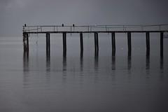 Embarcadero Hornopirn (Manuel Saavedra C.) Tags: chile winter sea patagonia rain birds canon puerto lluvia carretera south t3i jote austral 1585mm
