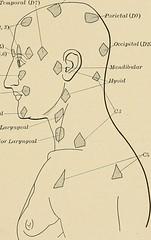 Anglų lietuvių žodynas. Žodis somatic sensory system reiškia somatinių sensorinės sistemos lietuviškai.