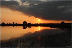 voor de avond valt (7D013964) (Hetwie) Tags: sunset nature landscape zonsondergang heather natuur ven landschap strabrechtseheide starven