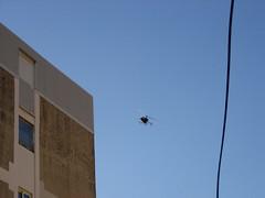 Chopper (T.J. Jursky) Tags: europe croatia split adriatic dalmatia spinut tonkojursky
