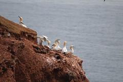 Helgoland (heiko.moser) Tags: natur insel helgoland heikomoser