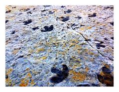 Dinosaur Ridge, Morrison, Colorado (- Adam Reeder -) Tags: onthego cellphone iphone mobile snapshot adam reeder travel photography photos flickr phone go 2014 awesome world photo cool spectacular