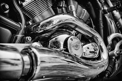 It's a bit of an animal! (the weavster) Tags: harleydavidson vtwin vrod vrodmuscle