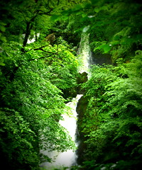 Waterfall through the trees (Tony Worrall Foto) Tags: county uk trees england green nature wet water flow outdoors photo waterfall stream tour place natural country north lakes visit location cumbria land splash item undergrowth 2014tonyworrall