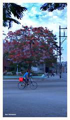 Cosas que vi en La Habana. (XXII) (Imati) Tags: leica calle exterior cuba bicicleta verano rbol hombre lahabana viandantes tendido