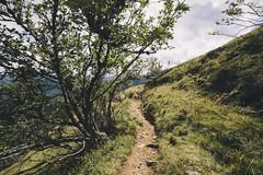(Tobi Nielsen) Tags: hiking schwarzwald blackforest feldberg wanderung belchen