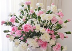 Perfumed Elegance (bigbrowneyez) Tags: flowers nature beautiful soft sweet fresh special dolce gift precious mamma dreamy bouquet elegant fiori delicate belli regalo tender classy carnations scented bellissimi perfumed romanntic giftformymom perfumedbouquet