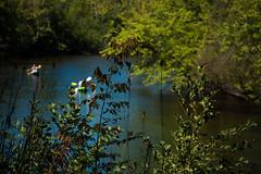 DSC_3012-1 (olegmihans) Tags: nature gardens botanical university michigan arboretum m u nichols matthaei