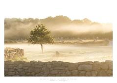 Un matin aux alignements de Carnac (Antoine Moutiers) Tags: mist france tree fog sunrise brittany europe bretagne arbre morbihan brouillard brume carnac l
