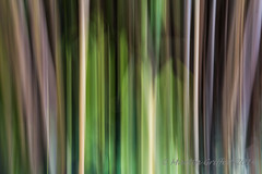 Bamboo (4orty7even) Tags: summer plant abstract blur flower green lines vertical pattern stripes bamboo icm img201408239161