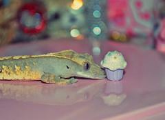 Can I haz cupcake? (kawaiimandi) Tags: cute animal bokeh reptile pastel lizard cupcake kawaii gecko crested crestie