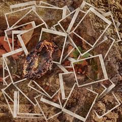 Narrenturm Apples of Paradise, autumn on the brick wall of Fools` Tower - Paradiespfel, Aktion Herbst auf der Narrenturm Ziegel-Mauer Moos - Hommage a Friedemann der Teppichweber (hedbavny) Tags: vienna wien autumn stilllife white brick art apple collage stone wall tomato studio akh grey austria sk