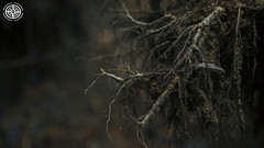 Roots (-ASD-) Tags: city trees england brown color colour texture nature colors grass town log woods colours natural forrest roots soil hastings