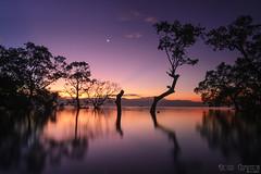 DSC_4396fb (prinz59prince) Tags: sea sky tree beach sunrise reflections stars philippines mangrove coulds davao mindanano