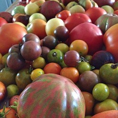 "It looks like we'll be eating a lot of heirloom tomatoes this weekend! In spite of the odd weather, the harvest is marching on and we're picking pounds of ripe fruit each day.  Are you harvesting tomatoes from your garden?  #tomato #heirloom #garden • <a style=""font-size:0.8em;"" href=""https://www.flickr.com/photos/54958436@N05/15146702555/"" target=""_blank"">View on Flickr</a>"