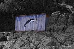 SBP_2497 Black&White Selective colour (StuNZ2) Tags: newzealand colour auckland nikkor selective boathouses nikond200 stuartbraithwaite kawakawabay 18105mmf3556ged