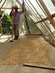 """Le guide nous montre comment ils font sécher les grains • <a style=""""font-size:0.8em;"""" href=""""http://www.flickr.com/photos/113766675@N07/15265951486/"""" target=""""_blank"""">View on Flickr</a>"""