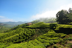 India - Kerala - Munnar - Tea Plantation - 88 (asienman) Tags: india mountains kerala hills teafactory teaplantation munnar teapicker asienmanphotography teaplantagens