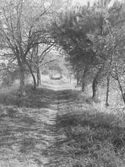 iph501 (gzammarchi) Tags: italia paesaggio natura ferrara lidodispina parcodeltadelpo oasi vallesina strada sentiero bn