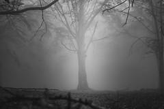 il sommo della Foresta (Manciothesound) Tags: alberi nature mountains blackwithe fog trip lights italy liguria canon canoneos canonofficial canonitalia canon7d photographer photo monocromo wild wildlife