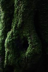 A Druid sacred tree (pepsamu) Tags: druid sacred tree druida sagrado rbol luz light plants plant planta verde green ireland eire irlanda 1100d canon kerry killarney naturaleza nature sombra sombras shade shadow torcwaterfall torc waterfall ringofkerry ring national park killarneynationalpark nationalpark mountain montaa wood bosque trees forest hollow hole hueco agujero mitologa mythology volume volumen curves curve lines s lnea lneas tronco truck