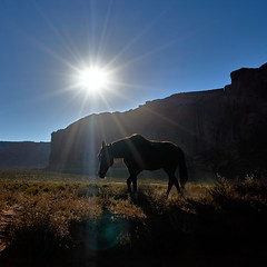 Indian Wild Horse (W_von_S) Tags: indianwildhorse horse wild indian monumentvalley landscape landschaft tier animal sun sonne wvons werner sony outdoor usa utah monumentvalleynationalpark gegenlicht backlight sunrise wow
