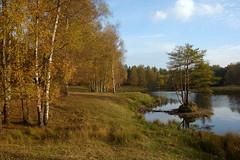 Boswachterij Dorst (JdRweb) Tags: boswachterijdorst nederland sonydscrx100