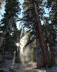 Trees (AidylJune) Tags: wildcalifornia california socal trees nature canon rebelt3i